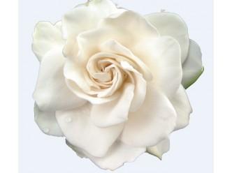 Huile fleur de Gardenia