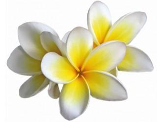 Huile fleur de Frangipanier