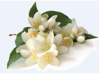 Huile fleur de Jasmin