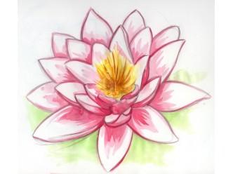 Huile fleur de lotus