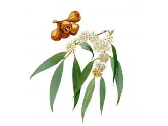 Huile parfumée à l'Eucalyptus