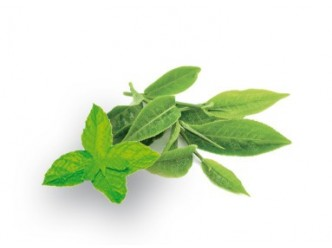 Huile parfumée Menthe & Thé vert